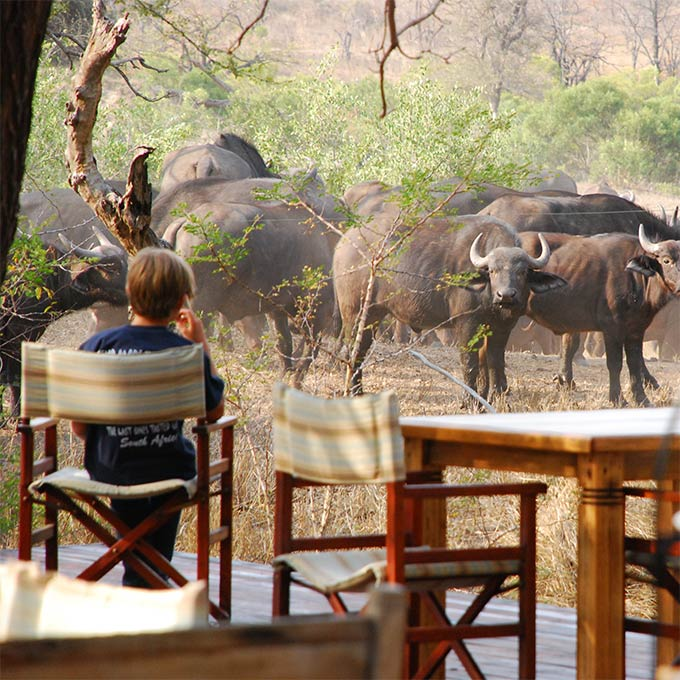 View Ngala Safari Lodge in Timbavati Game Reserve