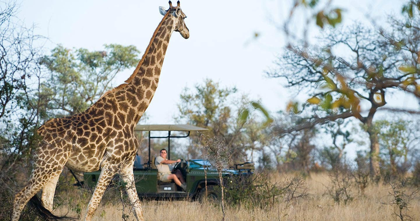 Enjoy a safari game drive with Makanyi Lodge in Timbavati Game Reserve
