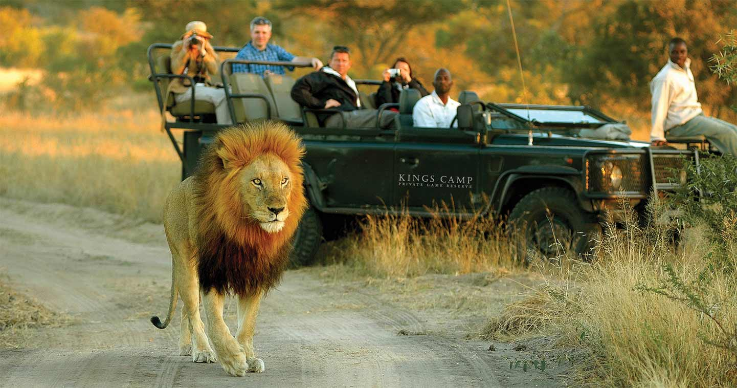 Game Drive at Kings Camp in the Timmbavati