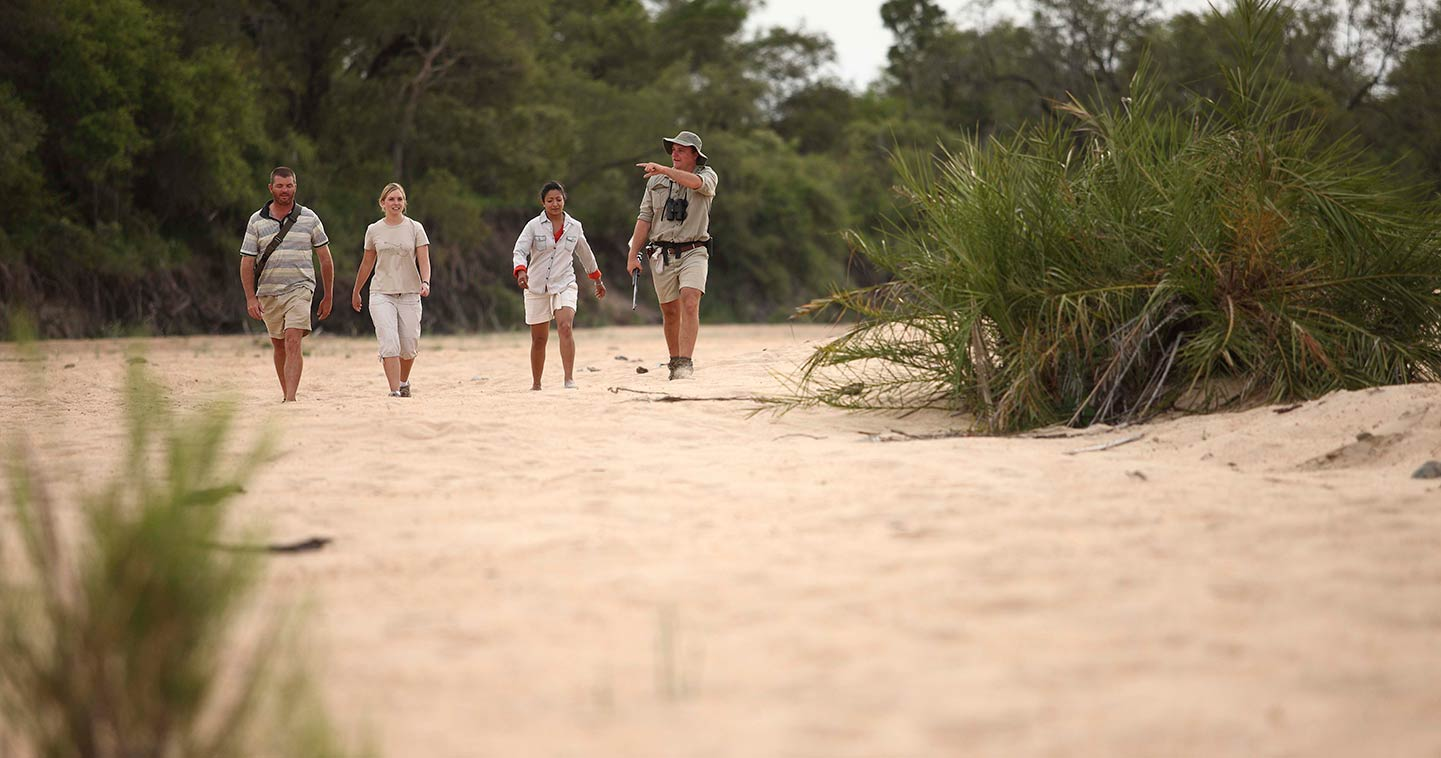 Enjoy a walking safari with Ngala Tented Camp in Timbavati Game Reserve