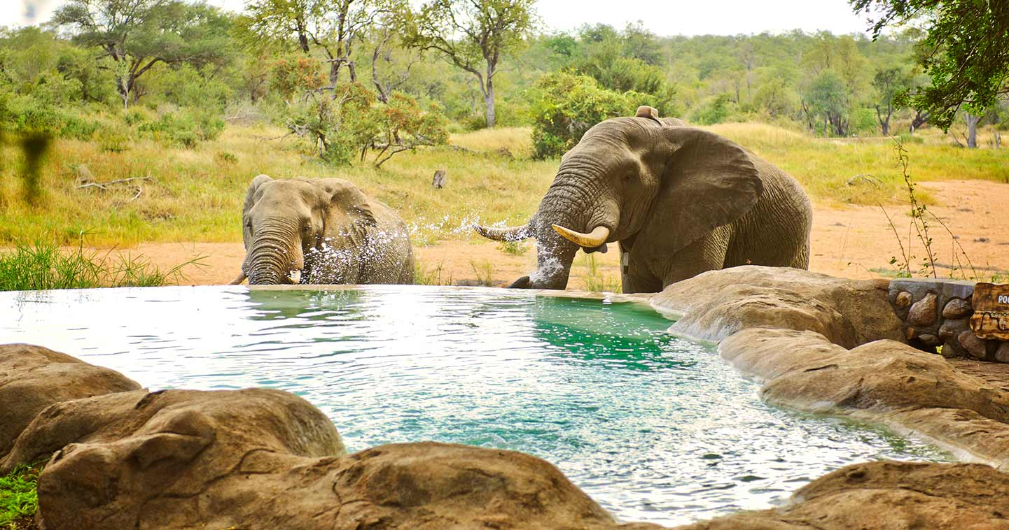 Pool at Motswari Game Lodge