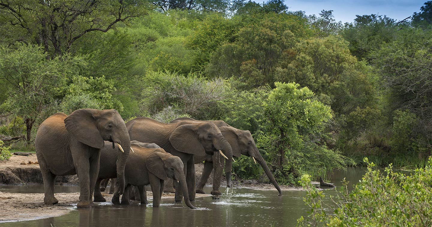 Elephant up close and personal in Timbavati, the ideal place for a Big Five safari