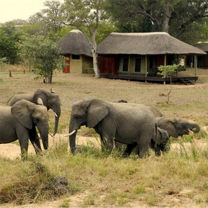 View Shindzela Tented Camp in Timbavati Game Reserve