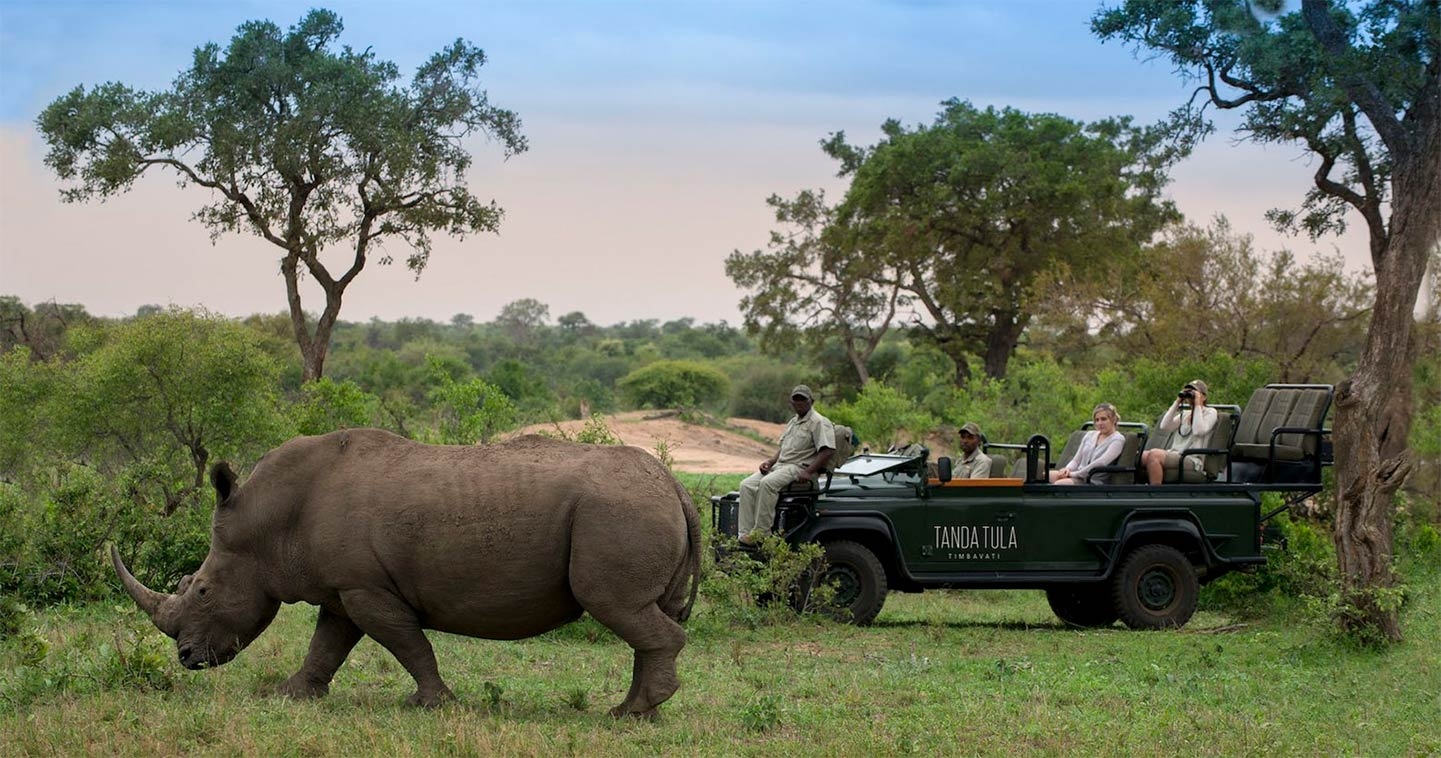 Viewing rhino during a Big Five safari in Timbavati, South Africa