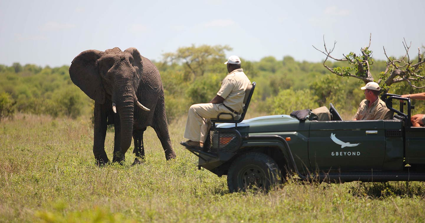 Wildlife at Ngala Safari Lodge in Timbavati Game Reserve
